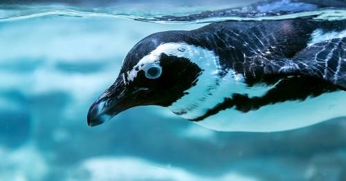 ラストペンギン
