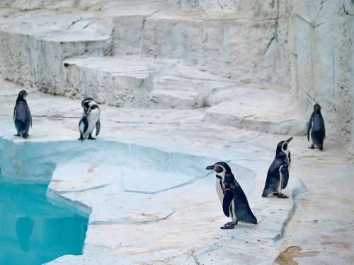 会社にペンギン6